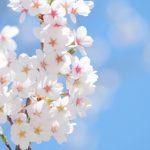 西公園(仙台)お花見情報まとめ!駐車場や渋滞情報など