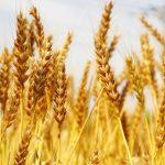 小麦粉の値上げ(2018)はいつから?値上げ幅や食品への影響についても