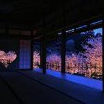 正寿院の桜の見頃はいつ?ライトアップや観桜会の予約方法についても紹介します!